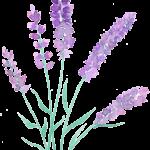 sprigs_lavender2